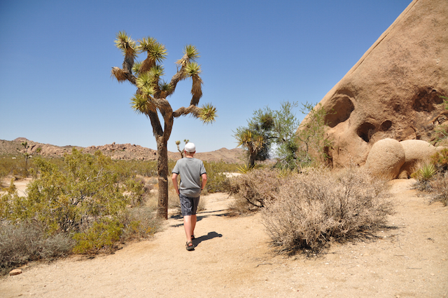 Joshua Tree National Park Today [wink wink]
