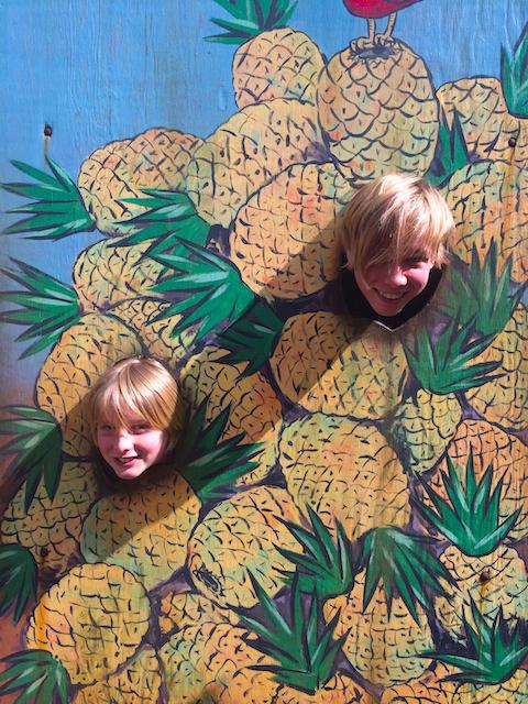 The Dole Pineapple Plantation Oahu 2014