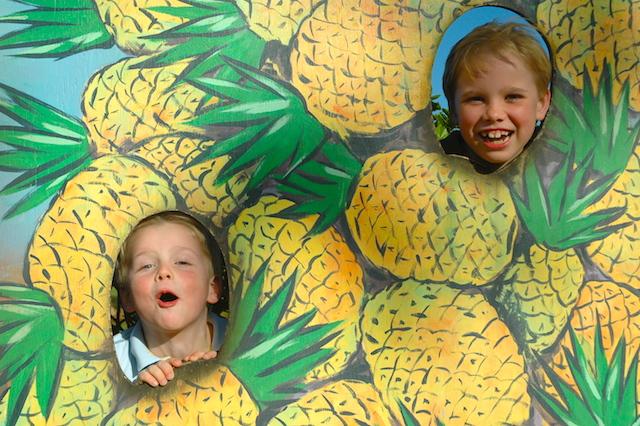 The Dole Pineapple Plantation Oahu 2007